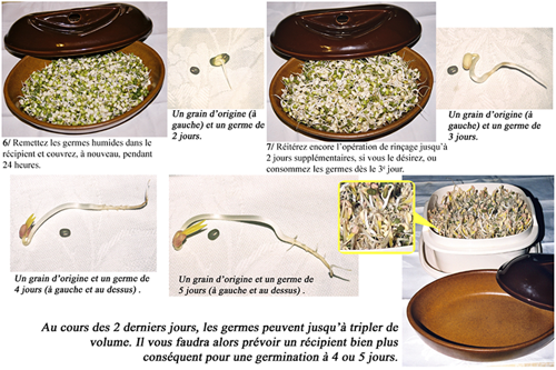 soja-germination-plaque-bas.png